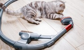 Best Canister Vacuums for Pet Hair (Updated for 2020)